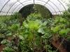 pyramid-greenhouse