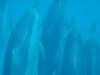 dolphin swimming