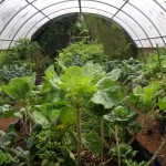 a vew of our organic greenhouse